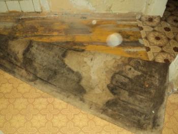 Плесень под линолеумом на деревяном полу